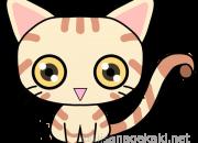 猫イラスト:ヨーロピアンショートヘア