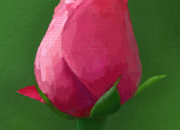 バラのつぼみ
