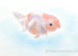 2017.08_金魚