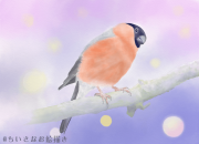 2017.10.07_夜明けの鳥