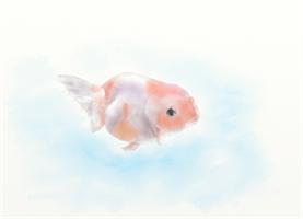 大人の塗り絵(水彩着色):金魚